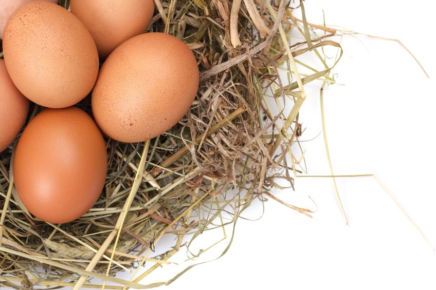Reasons Why You Should Start Eating Eggs