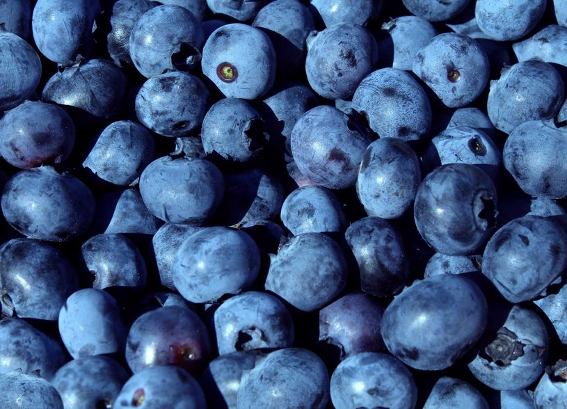 Why You Should eat  Blueberries